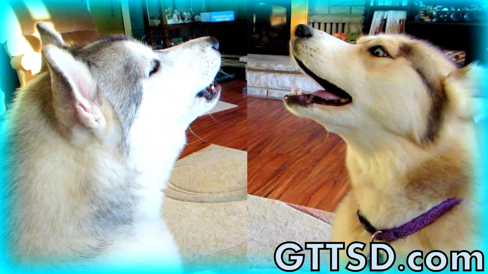 Youtube Video To Make Dog Howl