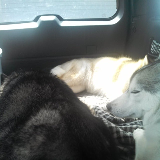 3 Happy Tired Huskies On Our Trip To Ohio S Hocking Hills