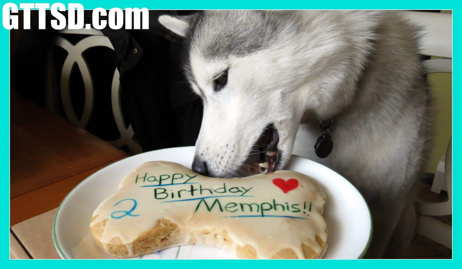 Dog stealing birthday cake - photo#9
