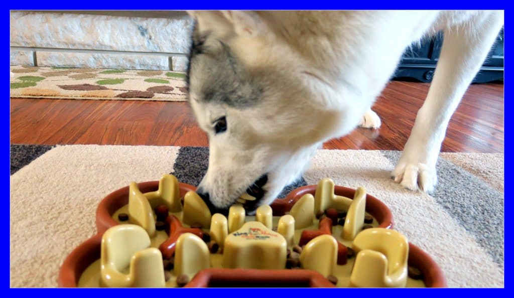Does Your Dog Eat Too Fast Guzzle Muzzle Giveaway Gone