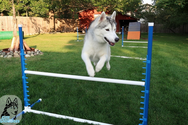 DIY Agility Jumps