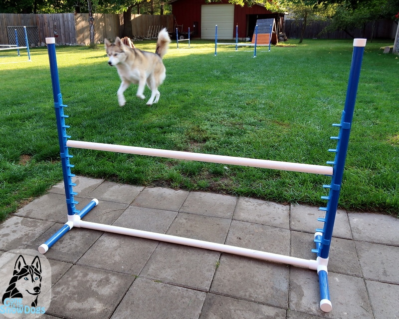 BIY Build your own Agility Jumps - DIY: Build Your Own Agility Jumps For Backyard Fun - Gone To The