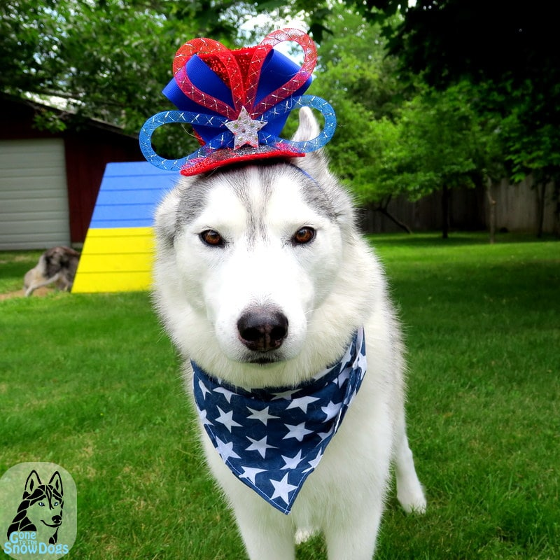 Huskies on 4th of July