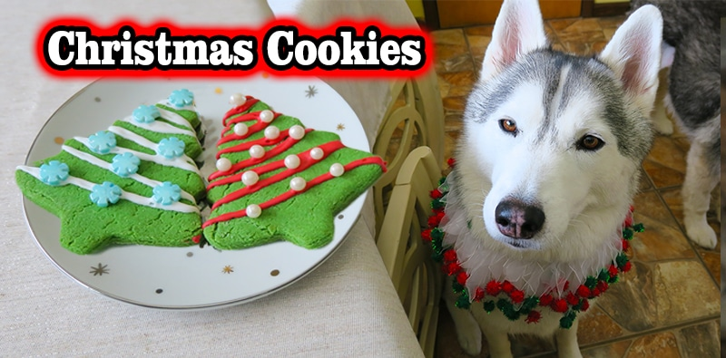 Diy Christmas Cookies For Dogs Gone To The Snow Dogs Siberian