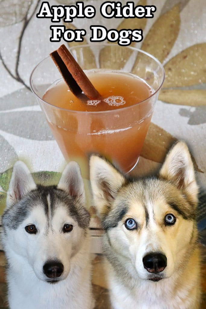 Apple Cider For Dogs